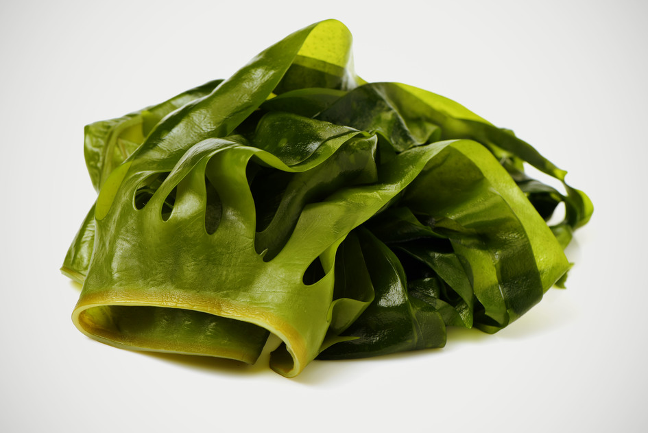 Larger wakame
