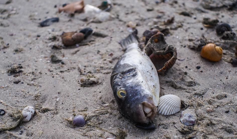 La Pesca Y El Calentamiento Global