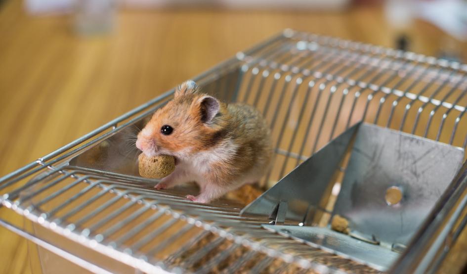 Plaga de ratones en casa great ratones en casa cmo - Como alejar las ratas de la casa ...