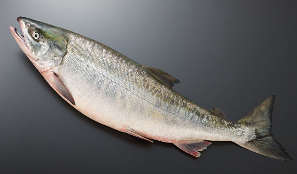 Larger salmon